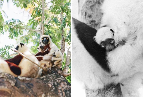 RYALE_Madagascar_Blog3_008