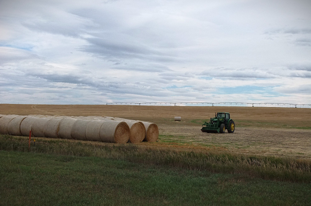 Montana Farmland
