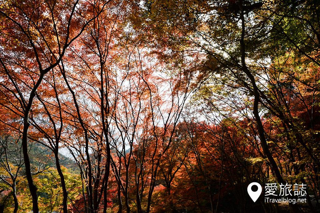 京都赏枫景点 神护寺 砚石亭 11