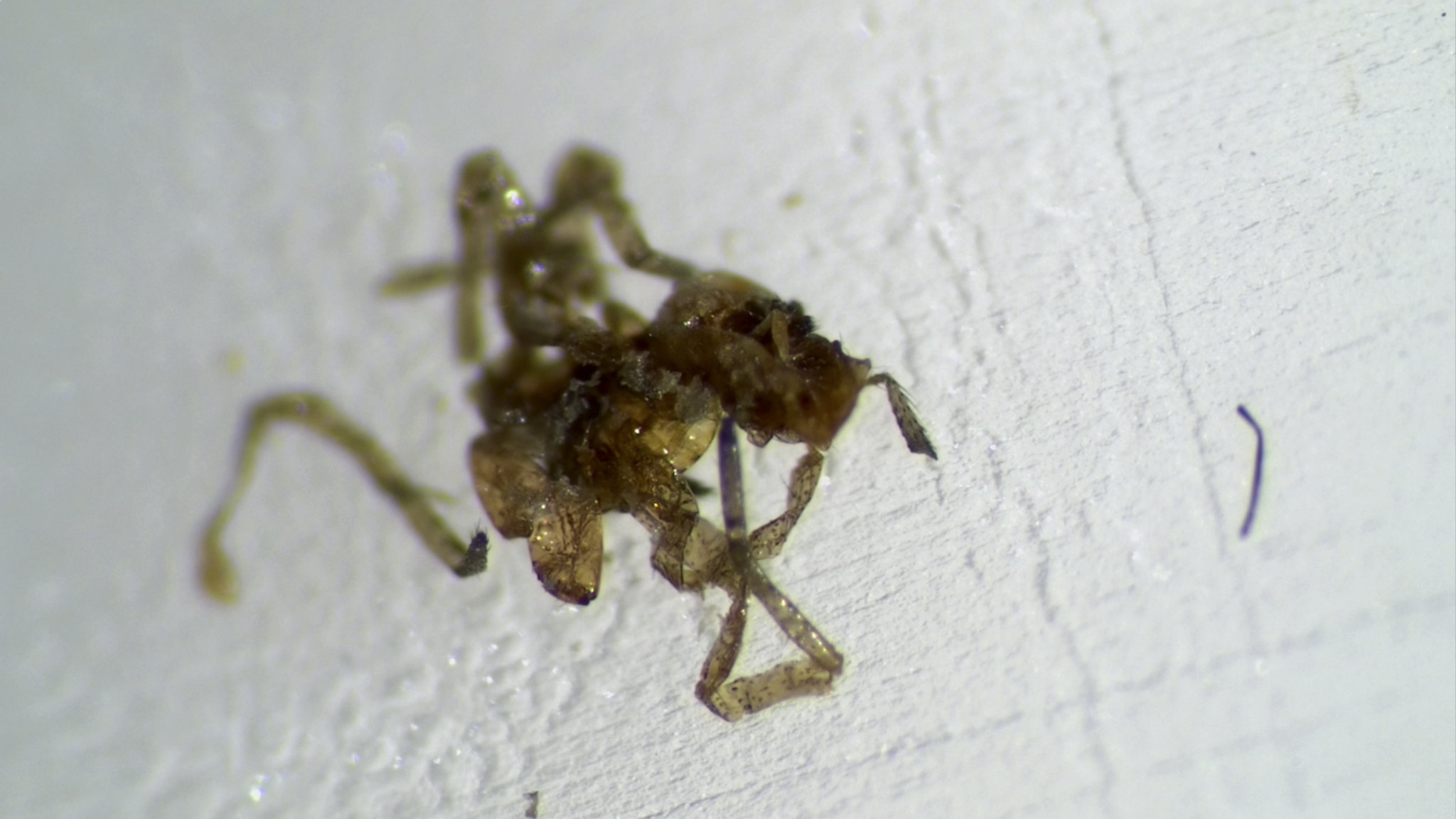 Bed Bug Forun