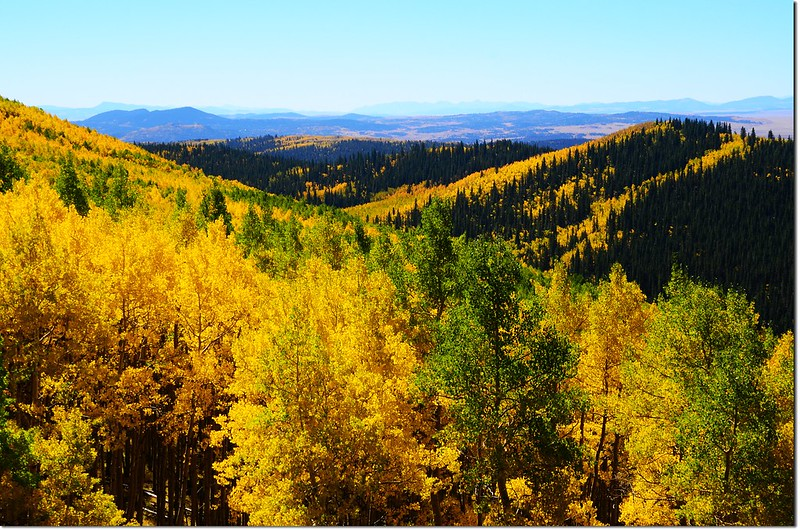 Fall colors at Kenosha Pass, Colorado (16)