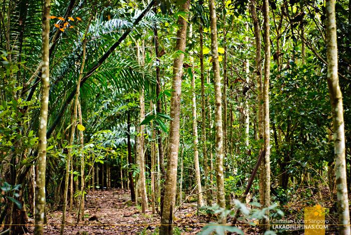 Songsalueng Natural Agricultural Centre Rayong Thailand