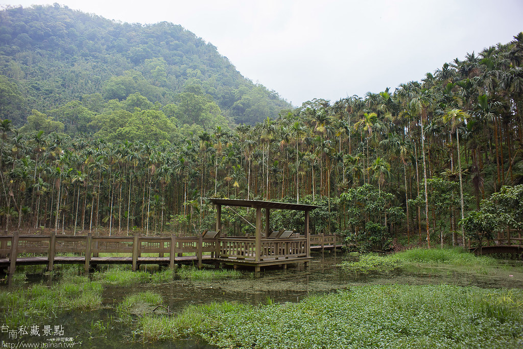 村長咖啡-天池咖啡步道 (1)