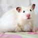 Hamster Alpha by hamstertroy