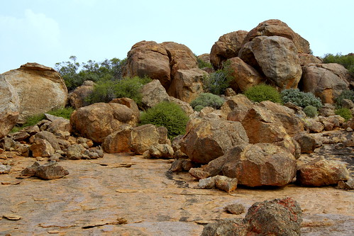 On top of mountain, among the rocks, - the habitat of this species