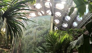 Neighborhood Days - California Academy of Sciences Biosphere view from below