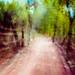 Barton Creek Trail