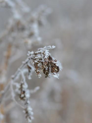 foggy weed