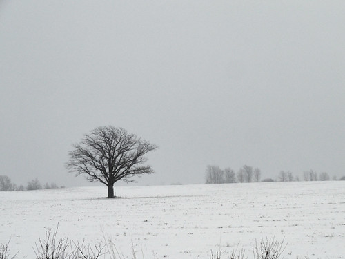 weather tree sky storm travelling intransit fields 2788 eatoncounty roxandtownship roxana michigan february sony enroute sonycybershot cybershot dsch55 sonydsch55 winter snow pocketcam 2015 onthisdate 48366