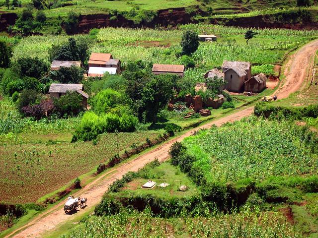 Madagascar2 - 116