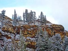 Sentinals in Snow, Yosemite 5-15