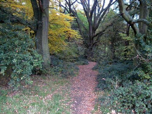 Autumn Run in the Heath