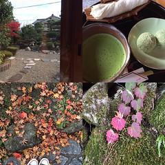 yesterday in Sakamoto   #hieisakamoto #shiga #比叡三九良 #比叡坂本 #滋賀 #latergram
