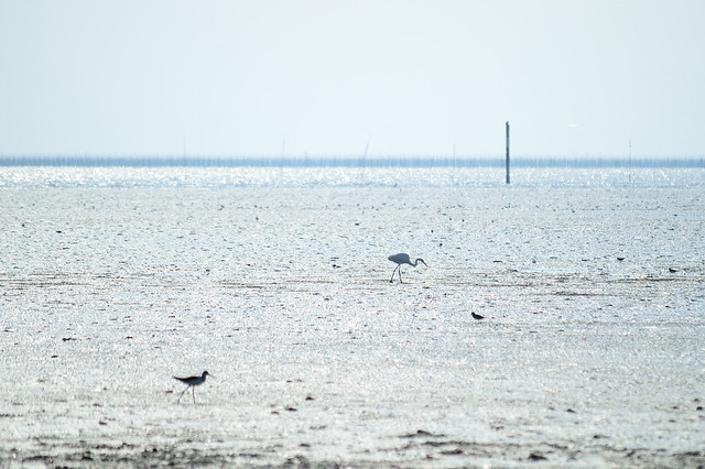 有明海干潟 Tidal Flats in the Ariake Sea (2)