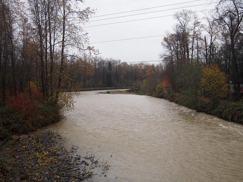 Surging Tolt River: Big flood!