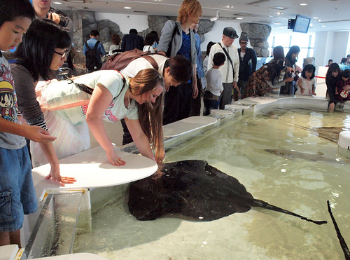 Petting a Ray