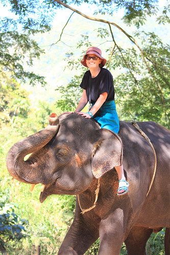 Mae Teng: Woody Elephant Training