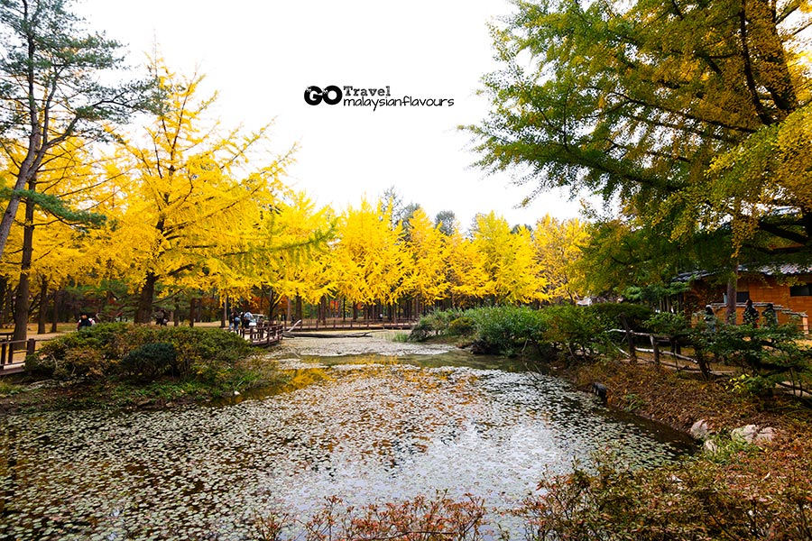 14 things to Do in nami island south korea seoul