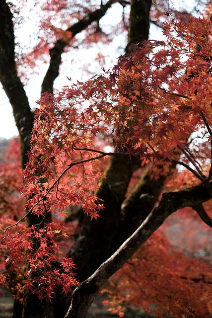 Autumn at the trace4@Koran-kei, near Nagoya