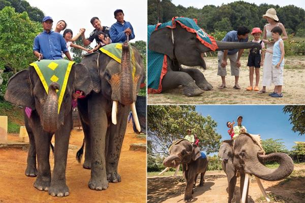 Bintan Elephant Park 2