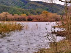 Elizabeth Lake Autumn Colors
