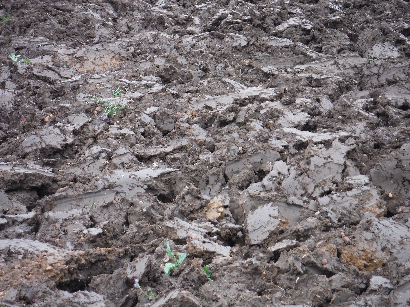 Freshly Ploughed Field SWC Walk 164 Roydon to Sawbridgeworth via Henry Moore Foundation