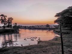 Masai River (Kenya) Sunset / Full of Hippopotamuses
