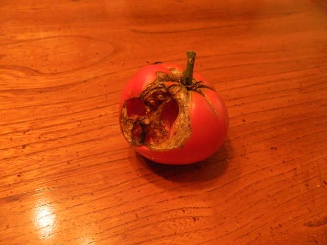 The Last Tomato
