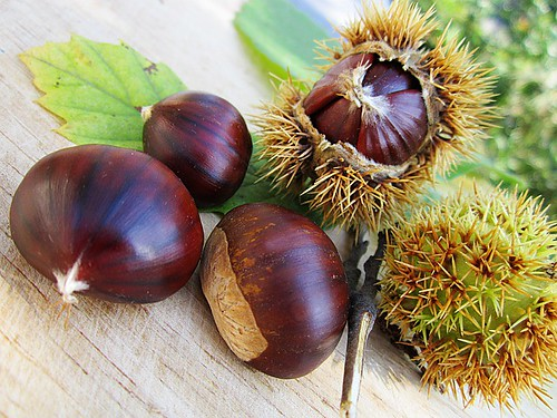 chestnuts01