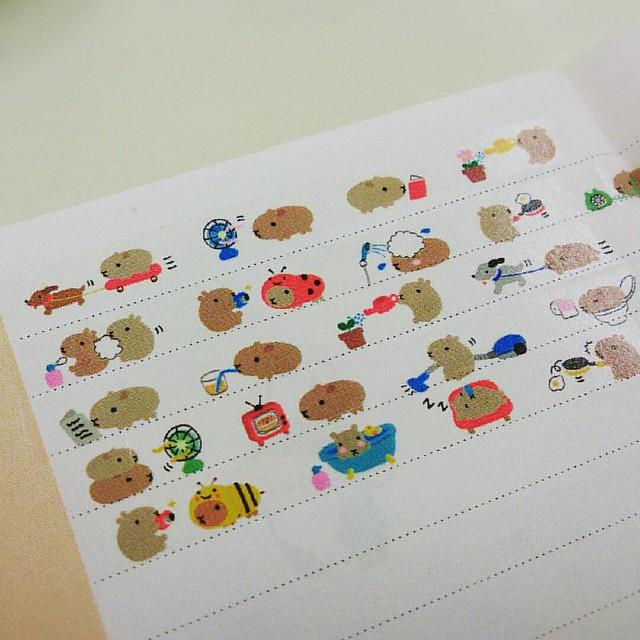 萌爆了好煩!!!!!!!!! <3 #kapibara #水豚 #花邊帶