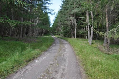 Dalnacardoch wood