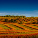 Harvest Panorama by qualistat