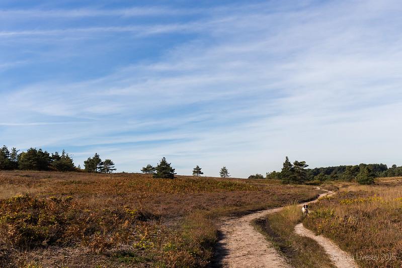 Heading across the heath
