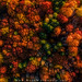 Autumn Tree Tops by Adam Woodworth