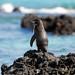 Galapagos Islands 06-2009-102.jpg