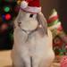 Feliz Navidad by gonzalezteresa33