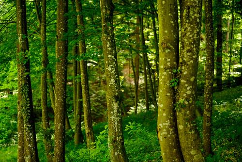 travel trees vacation tree green castle nature forest landscape europe scenic croatia hr trakošćan dvorac trakošćancastle krapina castletrakošćan varaždinskažupanija dvoractrakošćan