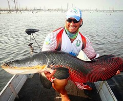 I M P R E S S I O N A N T E a cor desse pirarucu fisgado na Amazônia pelo Tete Fishing.  #pescaamadora #pesqueesolte #baitcast #fly #pescaesportiva #sportfishing #fishing #flyfishing #fish #bassfishing #bass #angler #anglerapproved #monsterfish #bigfish #
