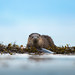 Otter by Lyle McCalmont