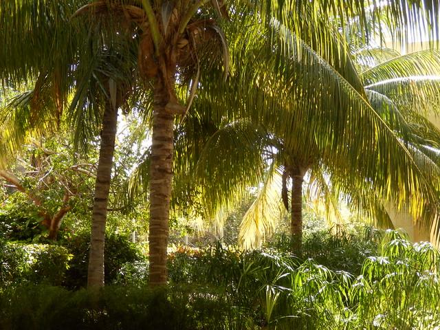 En la exuberante naturaleza cuban