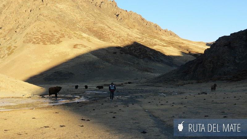 Desierto Gobi Mongolia Dia3 (4)