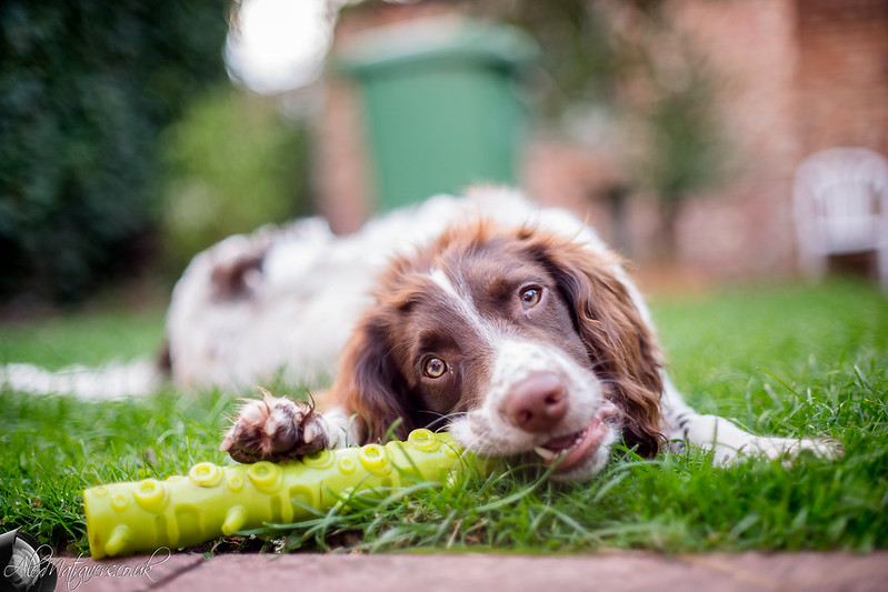 Dog behavior issues? We have some ways to help you identify and correct the most common ones.