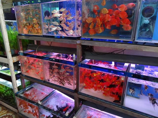 aquarium stores in Danang, Vietnam 20841169561_048a8c1506_z
