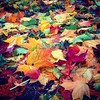 The Maple Leaves by i.bolshakov