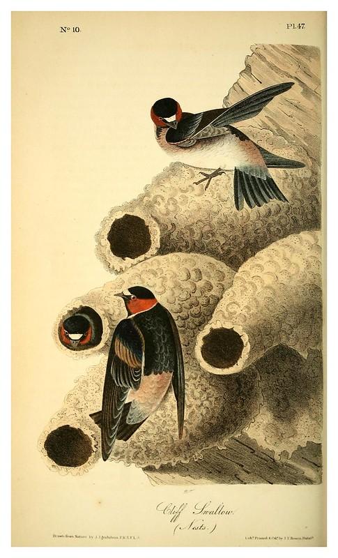 004- El republicano- Vol1-1840-The birds of America…J.J. Audubon