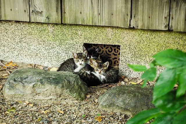 Today's Cat@2015-10-08