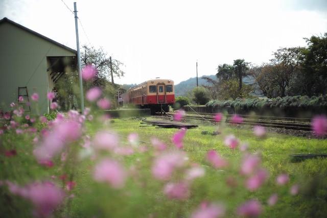 Cosmos & train
