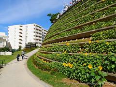 第2回大石公園ひまわり祭り2015-24