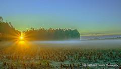 Groundfog at Sunrise