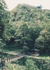 2015_11 阿里山_特富野古道 23